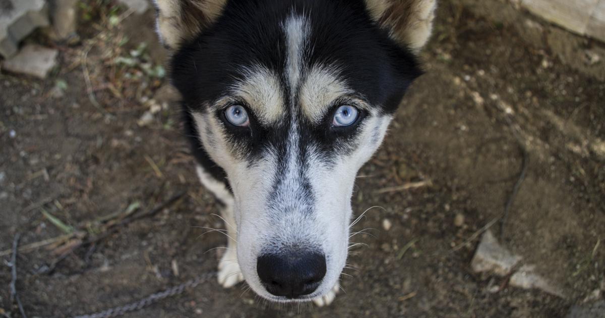 Пёс, собака, собака смотрит