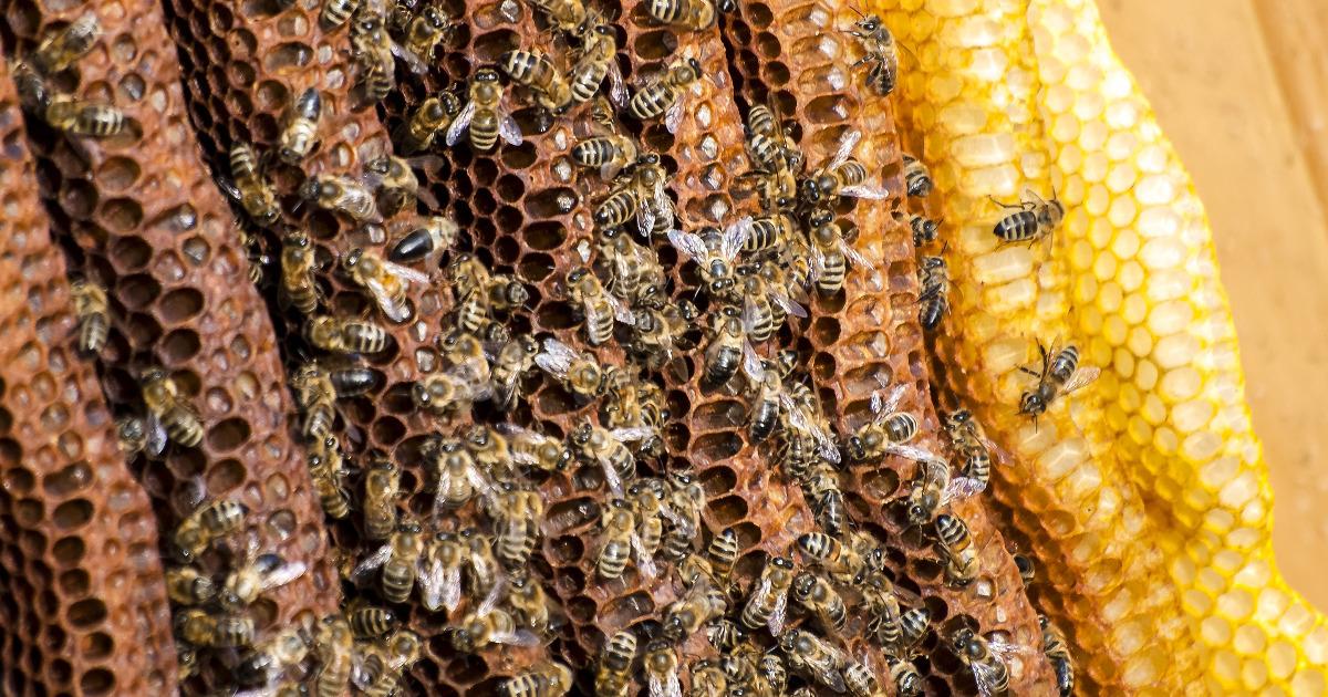 пчёлы, соты, улей