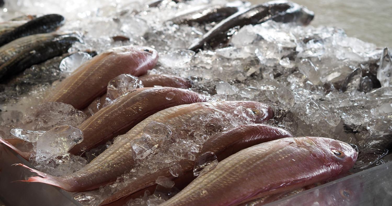 Рыбный отдел, рыба, супермаркет