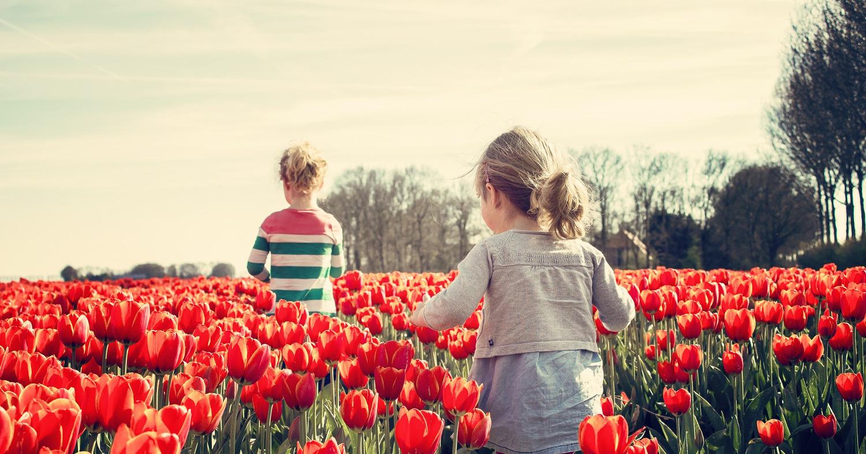 Девочки среди тюльпанов