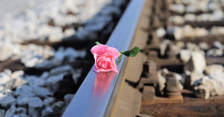 Роза на шпалах