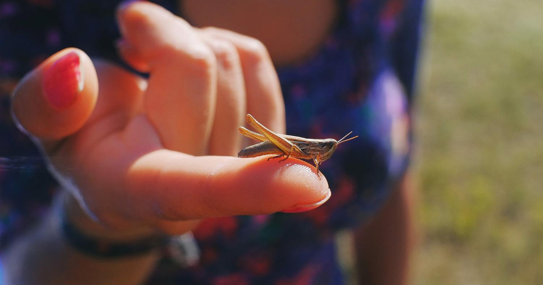 Девушка держит на пальце кузнечика