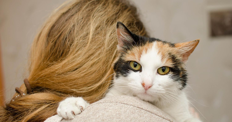 Котёнок и девушка