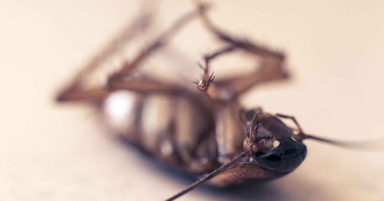 Экстремальное избавление от тараканов с последствиями